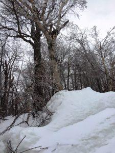 snow-shot