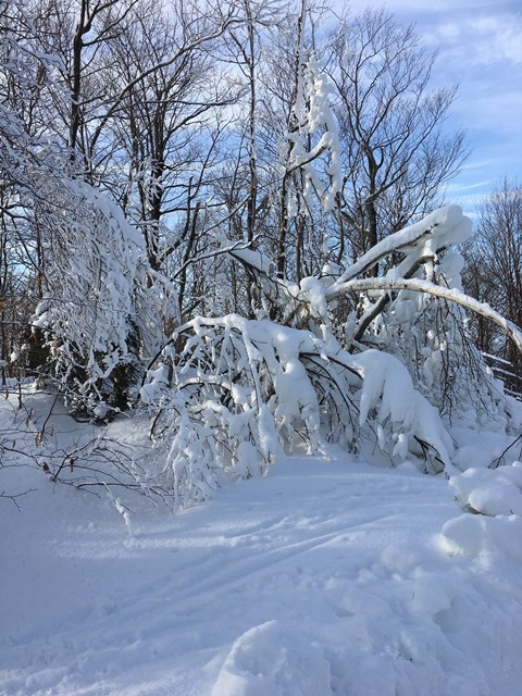 Snow covered trees on Graden Path