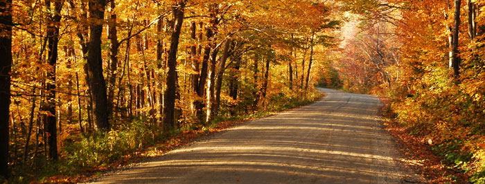 Country road with foliage