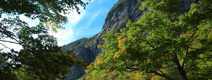 Foliage in Smugglers' Notch Pass