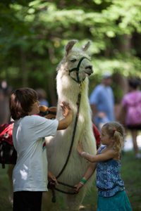 Llama trekking at Smugglers' Notch Resort