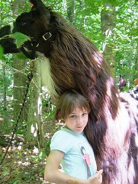 Llama trekking at Smugglers\' Notch Resort
