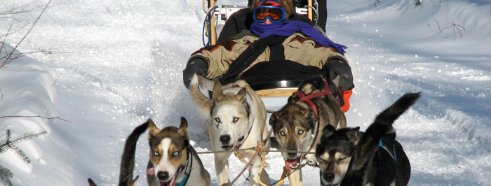 Sled Dog Craft http://waymarinc.com/images/dog-sled-craft
